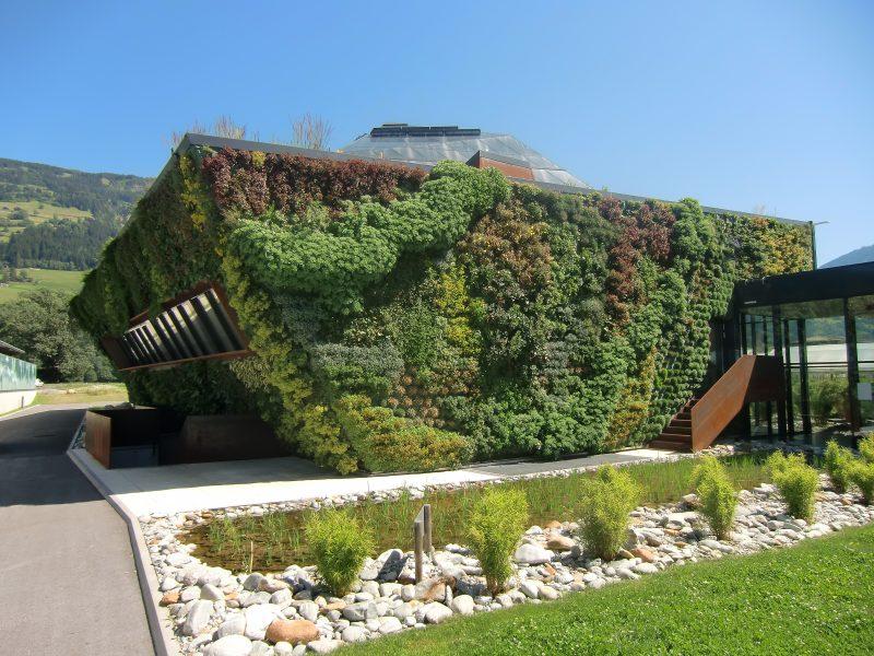 Ściany zielone